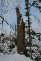Terminated tree by archaeopteryx-stocks