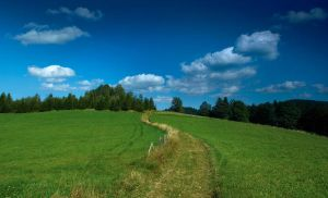 Path on green meadow by houk