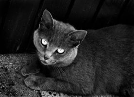 Black and White Tahsa by Lumaloo