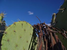 Barbed Wire on a Cactus by IcejCat
