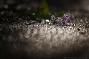After the Rain by jaelise
