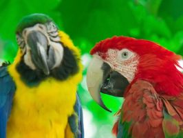 Macaws 001 by otas32