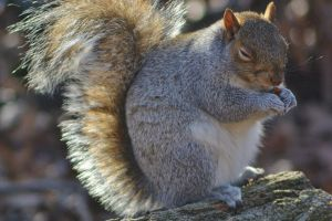 Squirrels of New York by JuliaElizabethK