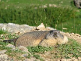 Quiet near my burrow by Momotte2