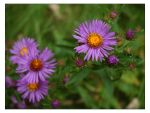 Purple Flowers by FromNothingToNothing
