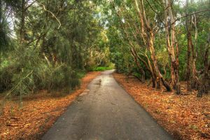 Barwon River Walking Track 2 by daniellepowell82