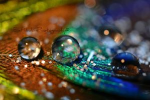 Peacock bokeh by EHilsdonPhotography