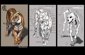 Tiger study by StanStill
