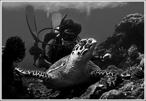 sea turtle by eltricko