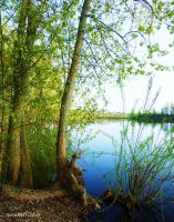 Little Lake by IpomeaTricolor