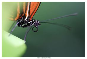 Lonely Butterfly by Emilie25