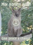 Give peace a chance. by tolko-smotrju