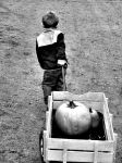 Pulling Pumpkins by smokeywild