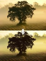 Photoshop Action 24 by w1zzy-resources