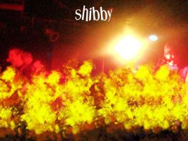 Shibby on fire by flamex1991