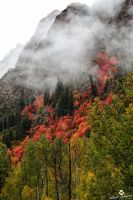 Smoke From the Trees by mjohanson