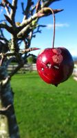 Crab Apple by Madi-Gascarr