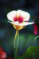 Flower by AgnesBPhoto
