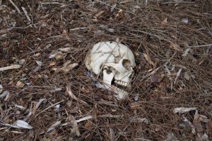 Human Skull 003 - HB593200 by hb593200