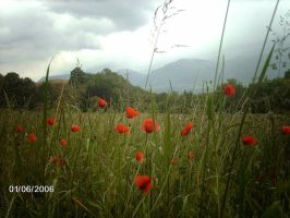 printemps by angeloup