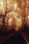 Road to nowhere by Branch91