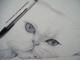 WIP Cat by Milena2011