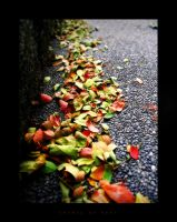 Colors of Fall by jdcon