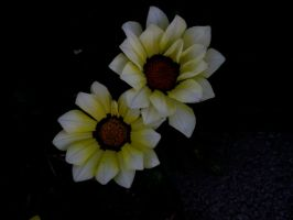 Flower Stock 18 by hp-abrasion