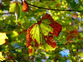 Autumn has began by giovannisorrenti