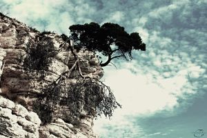 Life and death of a tree by Fruitz