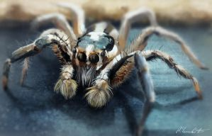 Study 02 Spider by MilicaClk