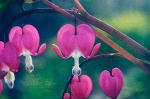 Hearts Close by MiaLeePhotography
