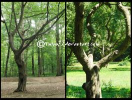 Stock Trees 1 by Twins72