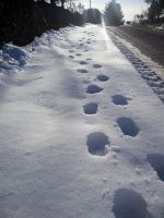 Footprints in Snow Stock by Meta-Stock