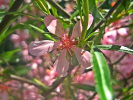 Rhododendron '01 by gr-unique