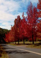 Blue Mountains Autumn by Abatwa-Oolie