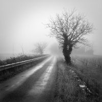 Foggy day by laurentdudot