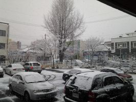 Snow in my town.... by Matsuri1128