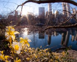 Squint - Central park by Tomoji-ized