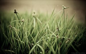 The Grass Ain't Greener by fixr