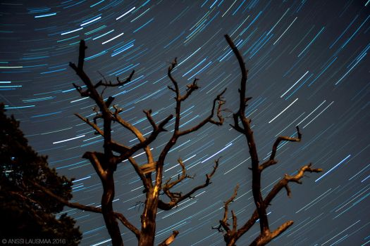 Star Trails 3 by v4nssi
