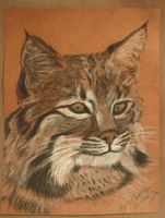 Bobcat Portrait by PrincessXena1027