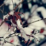 Waiting for spring. by deadstarx