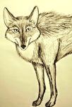 Just a Coyote by RabidTrapper