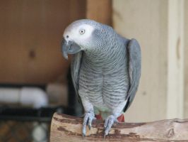 Parrot by dlance2005