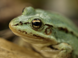 frog by mbamboo