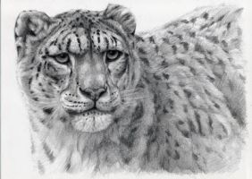 Snow Leopard portrayal by sschukina