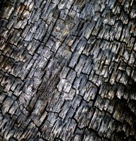 Charred Wood Texture 5 by PariahRisingSTOCKS