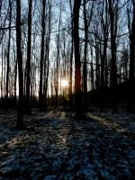 Sonne im Wald by radioANDrocketships