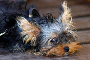 Dog Portrait 1580898 by StockProject1